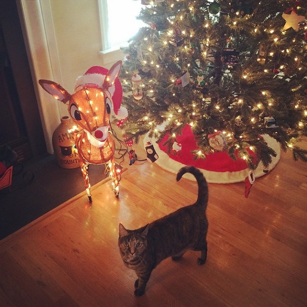 My cat Lily posing with the tree in 2014.