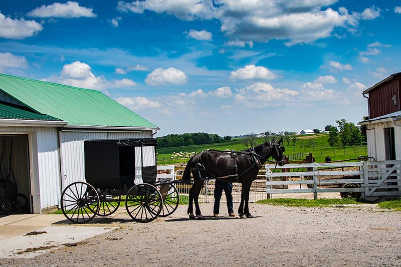 How The Amish Celebrate Thanksgiving