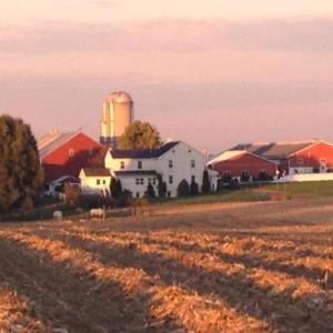 Fields of Corn Excerpt